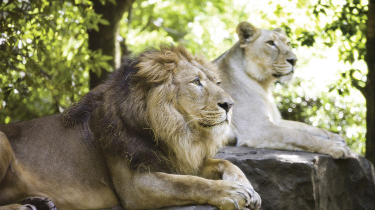 EFMP- Monterey Zoo